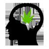 Domande e Risposte FAQ | Canabo | Vendita online Cannabis sativa light