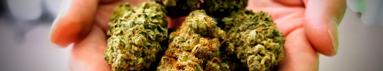 Canabo Shop | Vendita Online Cannabis Light Legale